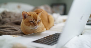 Catherine Heath—gato viendo pc