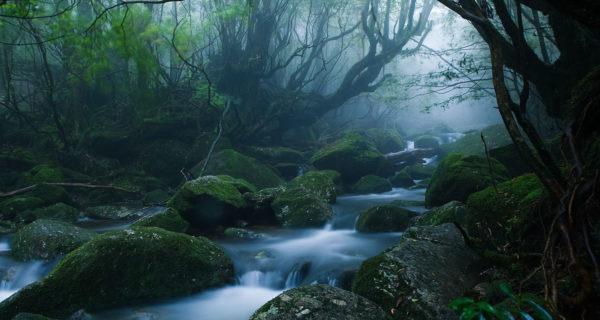 Mononoke forest – CC Por Caseyyee